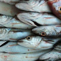 Incontro a Pozzuoli su strategie e sviluppo per la Pesca