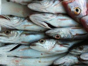 foto pesce bianco