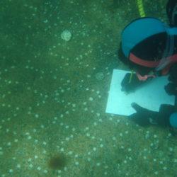 Area marina protetta di Baia, concluso il campo estivo subacqueo di Legambiente