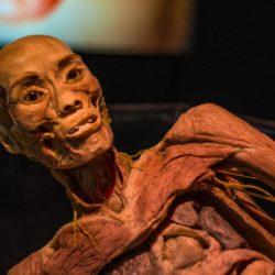 Human Bodies - the exhibition. Fino al 24 giugno, un viaggio nel corpo umano a Città della Scienza