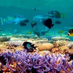 Alla scoperta della biodiversità e geodiversità del Golfo di Napoli. Corso di formazione nel Pan